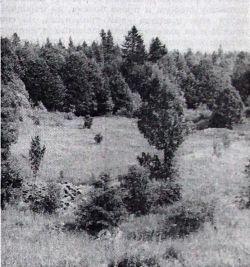 На овом лепом пропланку, званом Чачић-драга, усташе су под ведрим небом, у хладним ноћима кишовитог лета 1941. у жици држали хиљаде заточеника. Ту је био логор Јадовно