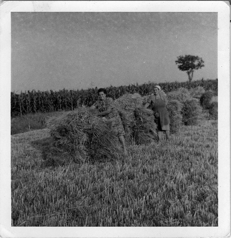 Slaganje žita u gran'ce