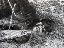 U knjizi na strani 143-b Srbin star oko 25-30 godina, ubile ga ustaše; ubijen metkom u leđa, na tijelu rane od tvrdog metalnog oruđa (čekić, budak)
