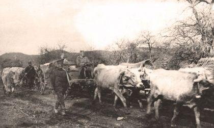 Једна од фотографиjа Ристе Марjановића; Болесни и остарjели краљ Петар одступа заjедно са воjском
