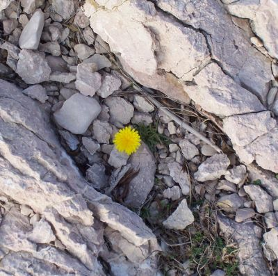 This single flower smiled to me. It gave me courage to continue.