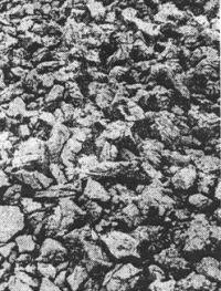 Kameni pod nekadašnjih logorskih baraka u Slani. Na tom oštrom kamenju boravili su i spavali logoraši.