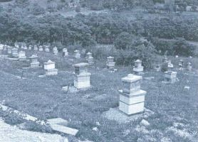 Pčele ih sprijateljile: uljanik ZORANA SUŠE na doskorašnjem imanju BLAGOJA JAGODIĆA u Potočanima