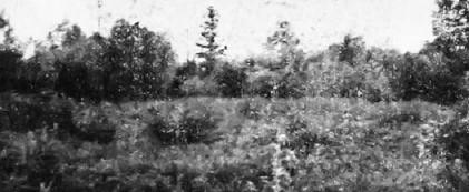 Sib - Partizansko groblje