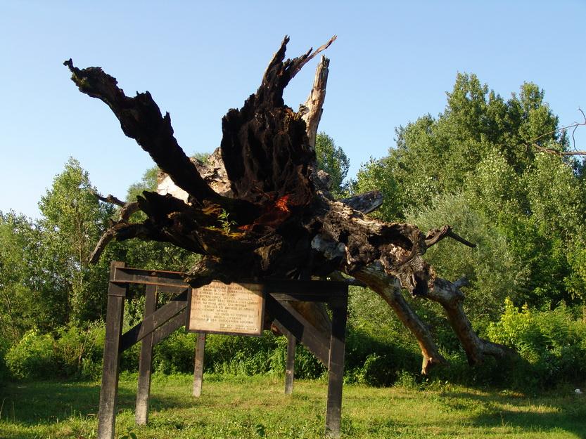 Jasenovac - topola užasa