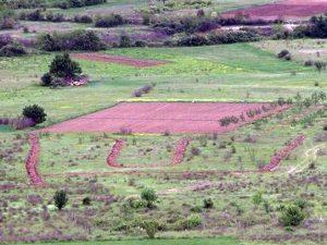 Popovo polje: Ustaški simbol  Foto: RTRS