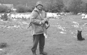 Nebojša Lukić ima stado od 350 ovaca