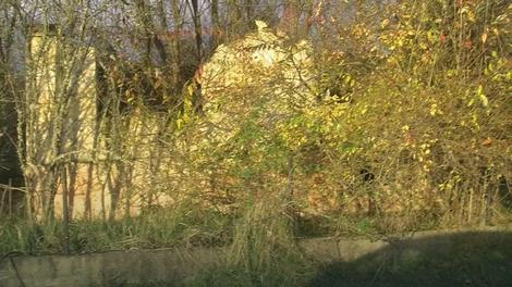 Porušene kuće, imanja zarasla u korov i šiblje Foto: Igor Premuzic / Facebook