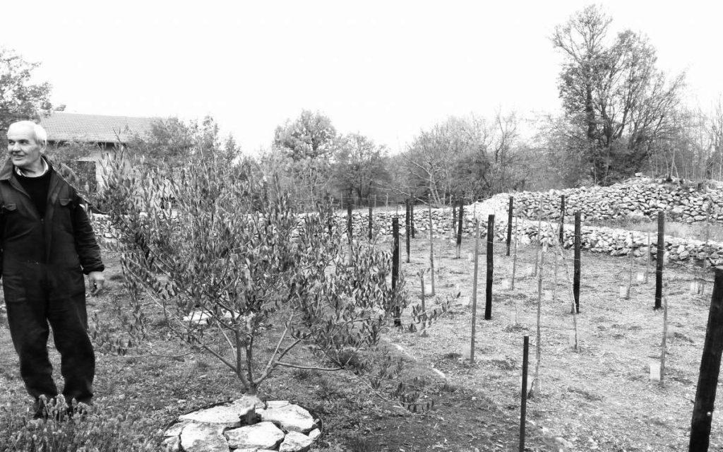 Ponosan na vinograd, kao svaki Dalmatinac - Veljko Tanjga Foto: Vaska Radulović