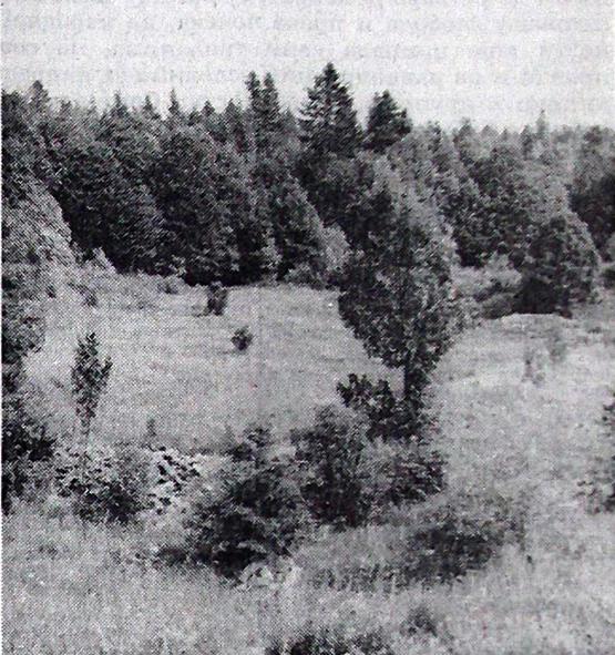 Na ovom lepom proplanku, zvanom Čačić-draga, ustaše su pod vedrim nebom, u hladnim noćima kišovitog leta 1941. u žici držali hiljade zatočenika. Tu je bio logor Jadovno