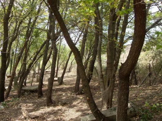 Slika 7. Izgled groblja posle čišćenja. Ostavljeno je dosta stabala za hladovinu – Lokacija Skočivir
