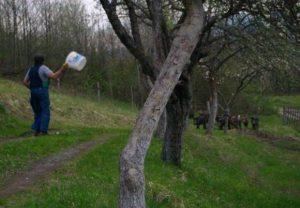Povratnici se brane od najezde divljih svinja