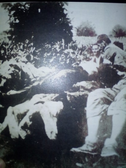 Sakupljanje ubijenih Srba u Prijedoru tokom Ilindanskog pokolja 1941. (Izvor: Vedrana Adamović, Godine stradanja 1941/42, Prijedor, 2018.)
